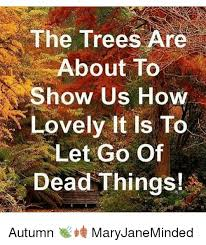 the trees are about to show us how lovely it is to let go of dead