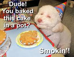 Stoned Dogs Meme - birthday dog meme anonamos3021