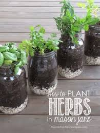 Window Sill Herb Garden Designs Hanging Herb Jars Fresh Herbs Herbs And Jar