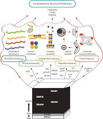 time space and disorder in the expanding proteome universe pdf