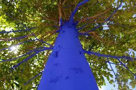 blue trees abc news australian broadcasting corporation
