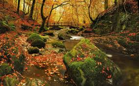 cool trees forest autumn grizedale forest cool trees nature woods wallpaper
