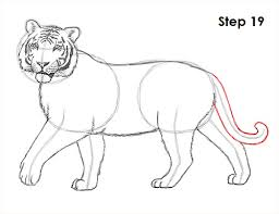 how to draw a tiger
