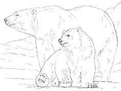 Are Bears Color Blind Mdna And Fossil Exam Links Bear Evolution Bears And Polar Bear