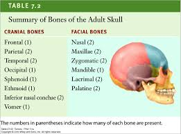 Bones That Form The Cranium Division Of The Skull Cranial And Pictures To Pin On