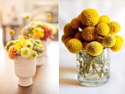 billy balls billy balls decorate with billy buttons craspedia emmaline