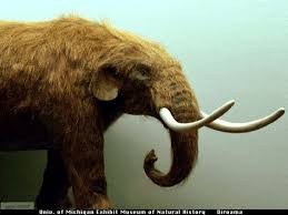 american mastodon michigan fossil sad