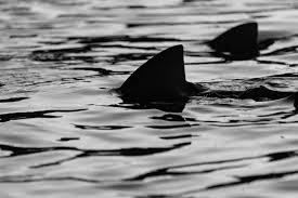 shark week 2016 100th anniversary of jersey shore attacks