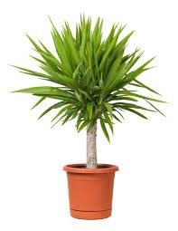 plant for office indoor plants suitable for an office environment small office ideas