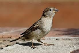 Indiana Birds images Bird control jpg