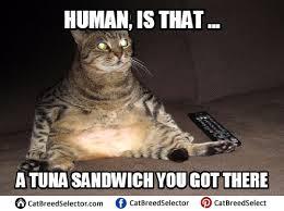 Cats Meme - fat cat memes funny cute angry grumpy cats memes pinterest