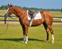 Horse Saddle by Saddle Horse Google Search Cai De Jucarie Pinterest
