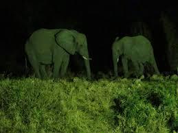 ent haut de cuisine pas cher pour echapper aux braconniers les elephants deviennent nocturnes jpg