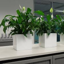 12 Best Plants That Can by Green Ideas Best Indoor Plants For The Office
