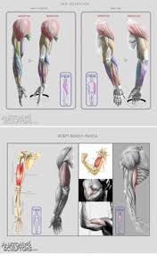 Human Anatomy Muscle To Help You Learn To Draw People Sometimes The Best Way To Learn