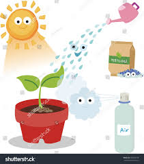 vital needs plant plants need sunlight stock vector 304083749