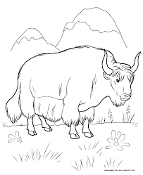 coloring pages yak
