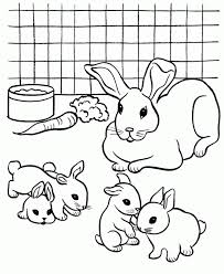 colouring pictures rabbits coloring