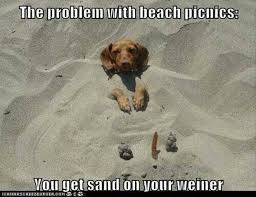 Weiner Dog Meme - funny weiner dog pictures funny pics collection 2017