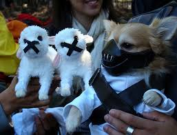 Halloween Costumes Yorkies Doggy Halloween U2013 1 Dogsandfashion
