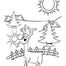 cute dasher reindeer coloring pages hellokids