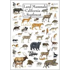 California Wildlife images Wildlife posters fish posters nature posters png