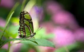 beautiful butterfly hd