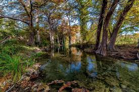 large cypress trees with stunning fall color lining a