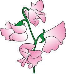 Sweet Pea Images Flower - sweet pea flower clipart