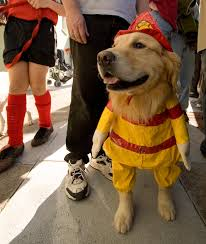 Halloween Costumes Dogs Cutest Puppy Costumes 2011 Fun Dogs Halloween Costumes