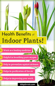 benefits of houseplants best indoor plants get natural air purifiers in your house