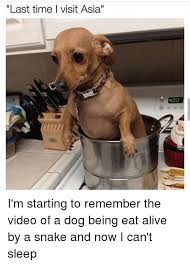 Asian Dog Meme - last time l visit asia i m starting to remember the video of a dog