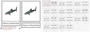montessori monday shark unit study