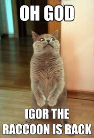 Racoon Meme - oh god igor the raccoon is back cat meme cat planet cat planet