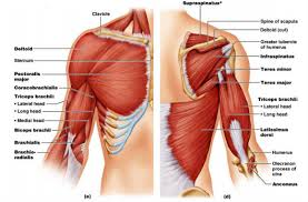 Pain In Shoulder When Bench Pressing Shoulder Pain After Bench Press Find Out How To Soothe Lifter U0027s