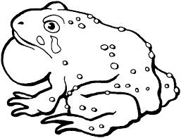 toad clipart black and white pencil and in color toad clipart