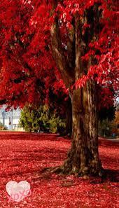 imagenes de otoño para fondo de escritorio pantalla para celular de arboles imagenes para celular