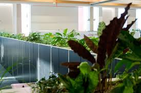 case study u2013 sky central indoor garden design ltd