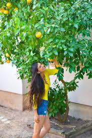 Apple Tree In My Backyard Kickstarter Since 2004 Fallen Fruit Has Planted Public