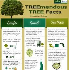 treemendous tree facts infographic