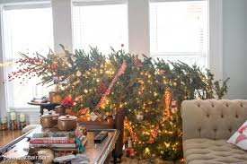 caring for a live christmas tree home decorating interior