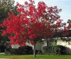 edmond tree planting michael johnson horticultural solutions