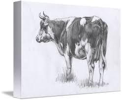 backward cow sketch by margaret stockdale