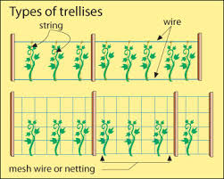 Cucumber Spacing On Trellis How To Trellis Melons And Other Climbing Plants