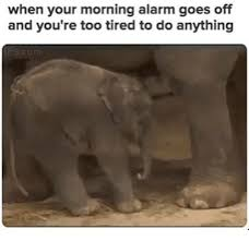 Too Tired Meme - 25 best memes about too tired to do anything too tired to do