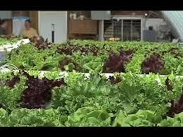 hydroponic lettuce farm in georgia youtube