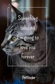 quotes pick me 100 best pet pick me ups images on pinterest pet adoption dog
