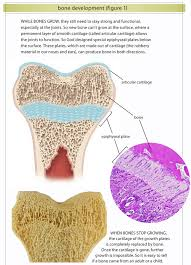 Which Cell Helps In Movement Of Bones Bones Answers In Genesis