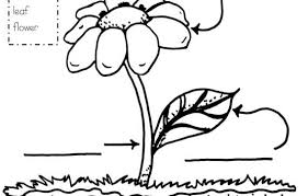 projects design parts of a flower coloring page anatomy flower