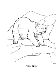 100 ideas coloring pages tundra animals on emergingartspdx com